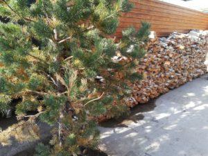 баня на берёзовых дровах астана